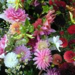 Dahlias-cactus, pom-pom, quilled, water lily types, huge color ranges.